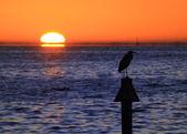 Sunrise — Stok fotoğraf