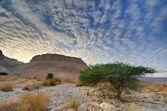 Masada — Stock Photo