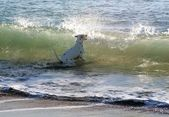 Dalmatian dog playing on the beach — Stok fotoğraf