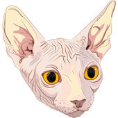 Vector sketch the cat breed Sphynx — Stock Vector