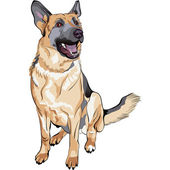 Vector color sketch dog German shepherd breed — Stock Vector