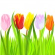 Vector of colorful spring tulips in grass — Stock Vector