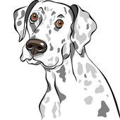 Vector schets hond Dalmatische Ras close-up portret — Stockvector