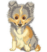 Vector puppy Shetland Sheepdog, Sheltie, Dog breed smile — Stock Vector