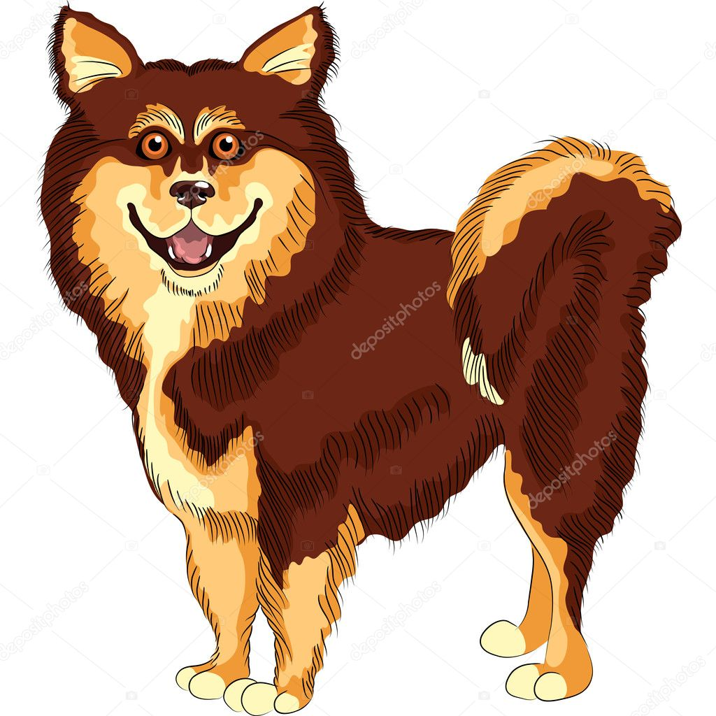 Sketch dog lapphund  breed smiling  Stock Vector #9920755