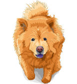 Vector color sketch of a dog chow-chow breed — Stock Vector