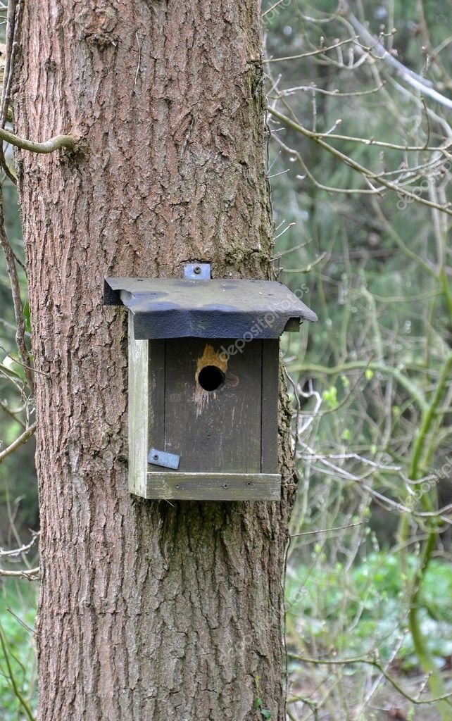 A wooden bird house on a tree in the woods  Stock Photo #10334534