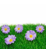 Lente bloemen op gras — Stockfoto