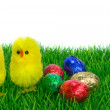 Easter chicks on grass - Stock Photo