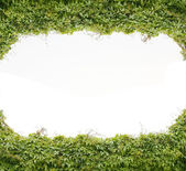 Green leaf frame — Stock Photo