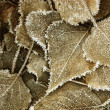 Foto de Stock  : Leaves covered with hoarfrost