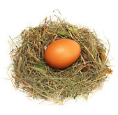 Egg in a nest — Stock Photo
