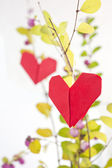 Paper heart on a tree — Stock Photo