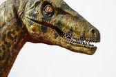 Deinonychus dinosaur head on white — Stock Photo