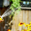 Watering Flowers — Stock Photo