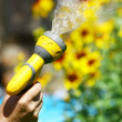 Watering Flowers — Stock Photo #9371546
