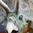 Triceratops dinosaur — Stock Photo
