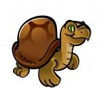Turtle animal pet reptile zoo — Stock Vector