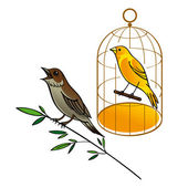 Nightingale and Canary bird fauna golden cage sing song brunch leaves — Stock Vector