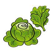 Fresh green Lettuce vegetable food market garden harvest — Stock Vector