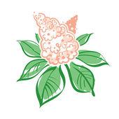 Vektorové ilustrace kaštanové květů a listů — Stock vektor