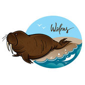 Walrus — Stock Vector