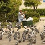 Happy senior feeding pigeons — Stock Photo #10601585