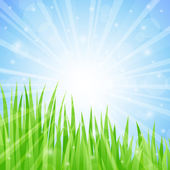 Summer Abstract Background with grass. Vector illustration. — Stock Vector