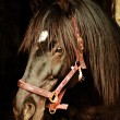 Portrait of black horse in stable — 图库照片