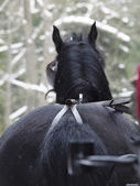 View of trotting horse behind at winter — Stock Photo
