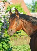 Portrait of around cute stallion near flower — Fotografia Stock
