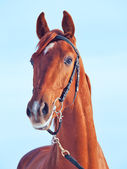 Portrait of beautiful young red horse at blue sky background — Stock Photo