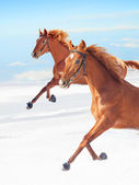 Amazing sorrel horses in movement at blue sky background — Stock Photo