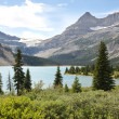Stock Photo: Bow Lake