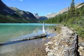 Lac sherbrooke — Photo