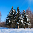 Beautiful winter landscape with snow and fir-trees — Stock Photo