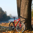 Red bike standing near trunk large tree — Stock Photo #8275958