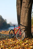 Red bike standing near a trunk large tree — Stock Photo