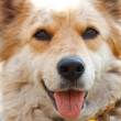 Portrait of beautiful dog — Stock Photo #8813649