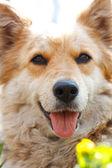 Portret przepiękny pies — Zdjęcie stockowe
