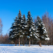 Stock Photo: Beautiful winter landscape with snow and fir-trees