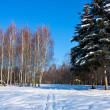 Beautiful winter landscape with snow and trees — Stock Photo