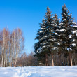 Stock Photo: Beautiful winter landscape with snow, fir-trees and birches