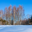 Beautiful winter landscape with snow and birches trees — Stock Photo
