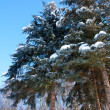 Winter landscape with snow covered fir-trees - Stock Photo