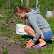 Young Woman Planting Seedlings of tomatoes in the Garden — Stock Photo