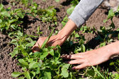 Hands of a Woman Caring on the Garden — Stock Photo