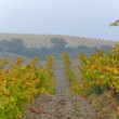 Mediterranean vinyard in autumn - Stock Photo