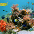 Colorful sealife — Stock Photo