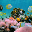 Beautiful coral reef — Stock Photo